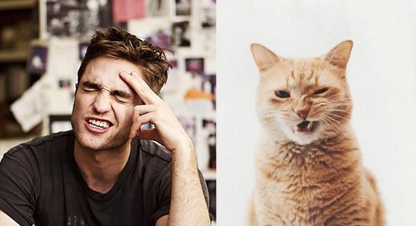 Мужчины и коты 2 (14 фото)