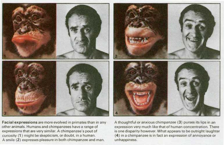 может ли быть у животных шизофрения социальной