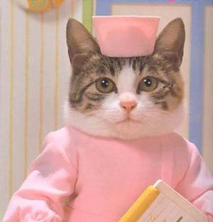 Ученые доказали: кошка должна быть в каждом доме!