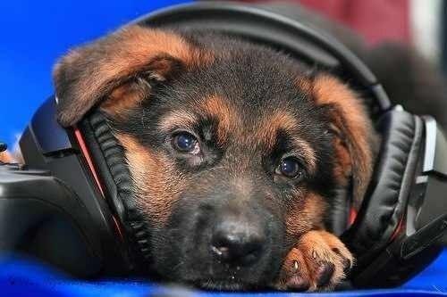 Собака спасла хозяина, вызвав по телефону скорую помощь