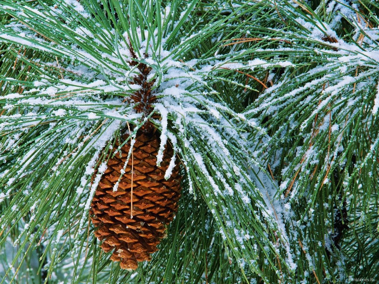 Nature Scenes - Winter :: NoNaMe