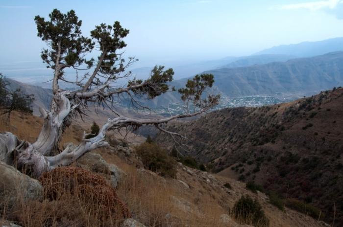 Здесь произрастает более тысячи видов растений. /Фото:blogspot.com