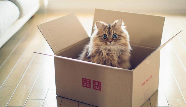 Логика кошек))