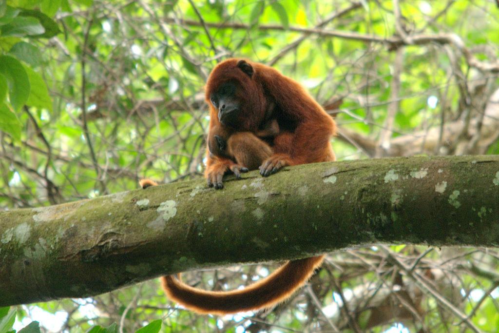 Обезьяны помогли туристу выжить в джунглях