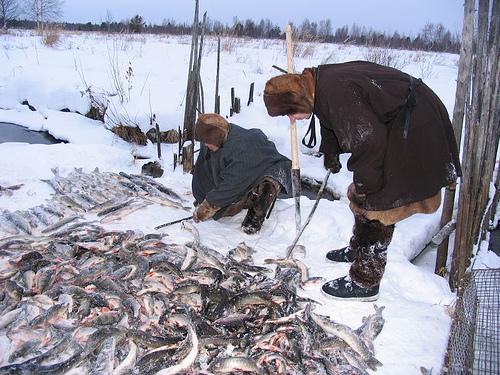 Рыболовство хантов и манси