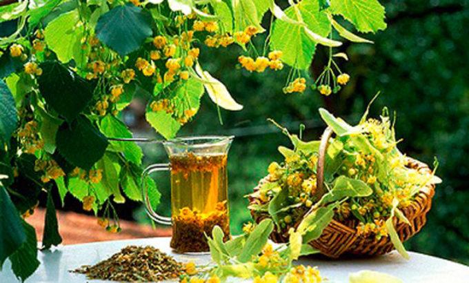 Растения обладающие жаропонижающими свойствами