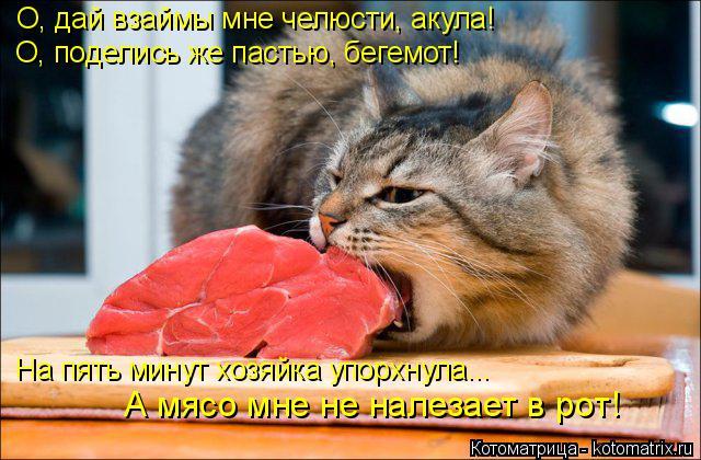Котоматрица: О, дай взаймы мне челюсти, акула! О, поделись же пастью, бегемот! На пять минут хозяйка упорхнула... А мясо мне не налезает в рот!