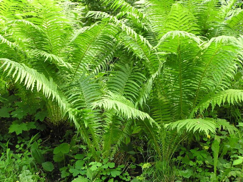 10 растений, которые могут расти в тени