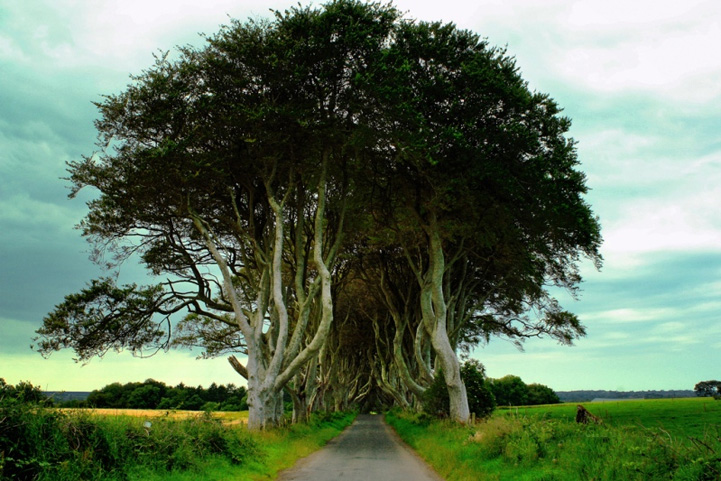 Mysterious trees in Ireland - 10