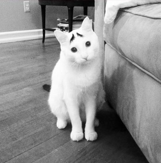 Грустить коты, милота, поведение, счастье, эмоции