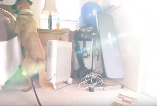 Хозяева этой собаки узнали, наконец, почему она смотрит на них, не отрываясь, каждую ночь