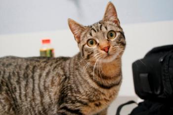 Бездомная кошка попросилась в квартиру. Утром люди широко открыли глаза…