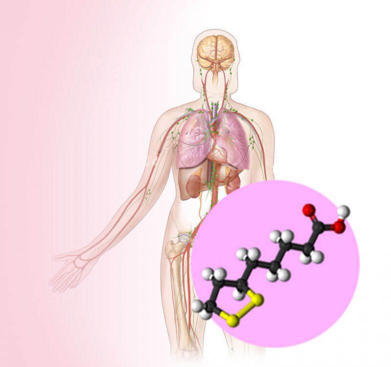 Для чего организму нужна альфа-липоевая кислота