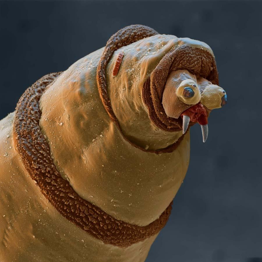 15udivitelnixsozdanii 1 15 удивительных созданий которых не разглядеть без микроскопа