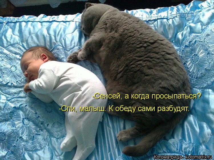 Котоматрица: -Сенсей, а когда просыпаться? -Спи, малыш. К обеду сами разбудят.