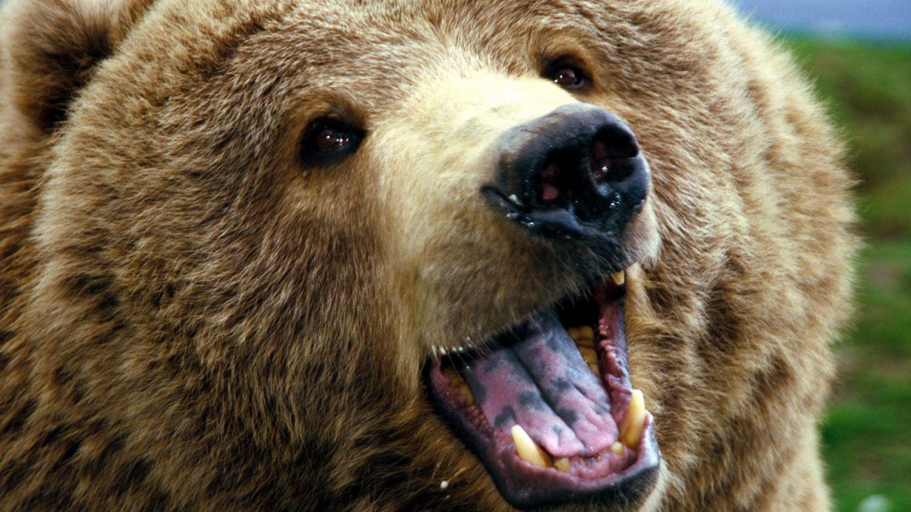 Вот это Повезло! Как мужик отразил атаку медведя в Сибири