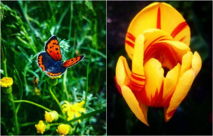 Сказочные фотографии цветов …