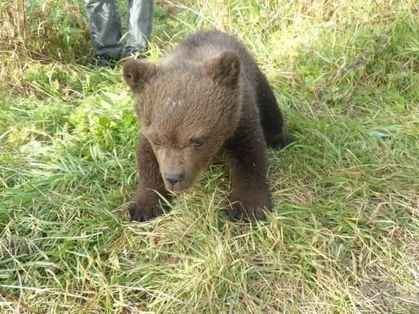 Очень печальная история медв…