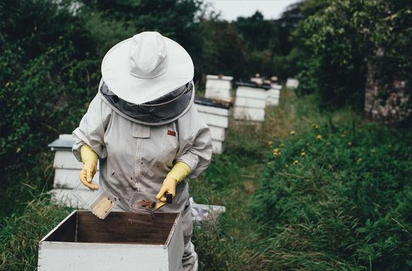 Ученые развеяли миф о «пчелином апокалипсисе»