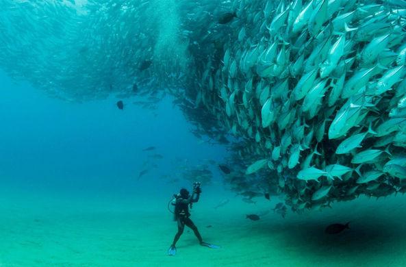 Вид рыб, способных оглушить дельфинов, оказался на грани исчезновения