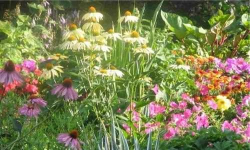 Выращивание цветов в саду. Общие сведения