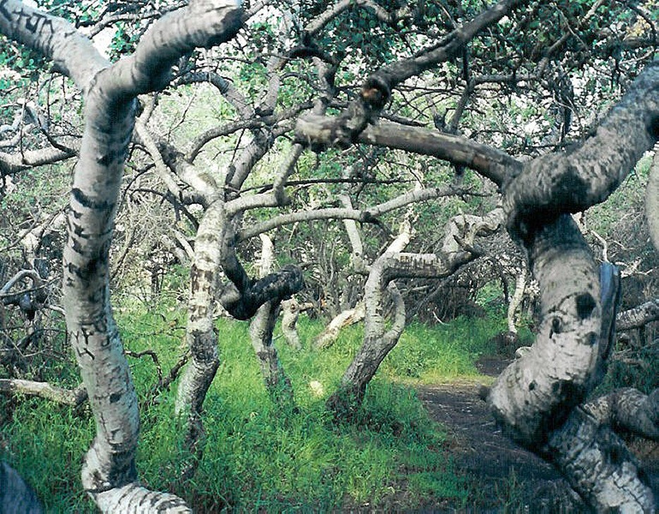 forests18 Леса с другой планеты!