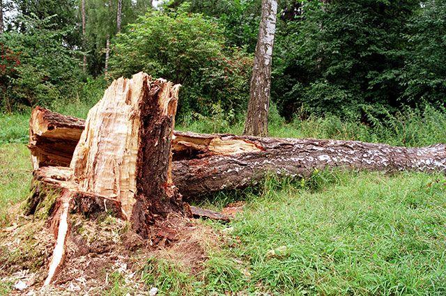 Как идёт борьба с незаконной вырубкой лесов в РФ?