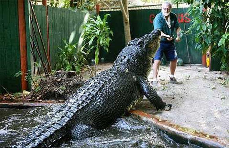 Охотник на рептилий, вот уже 30 лет живет с самым крупным крокодилом в мире