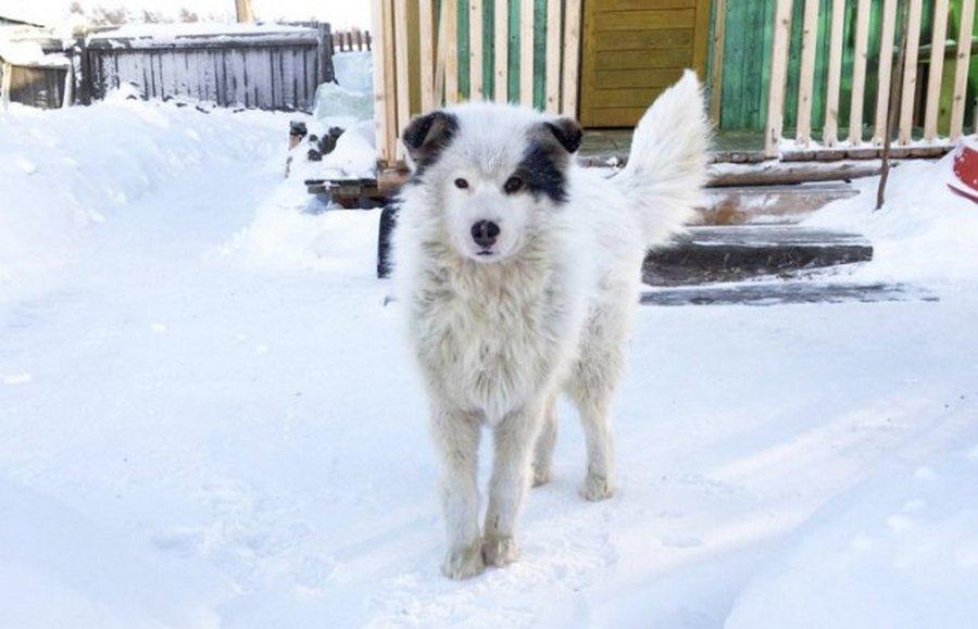 Собака замерзала, но спасала чужую жизнь