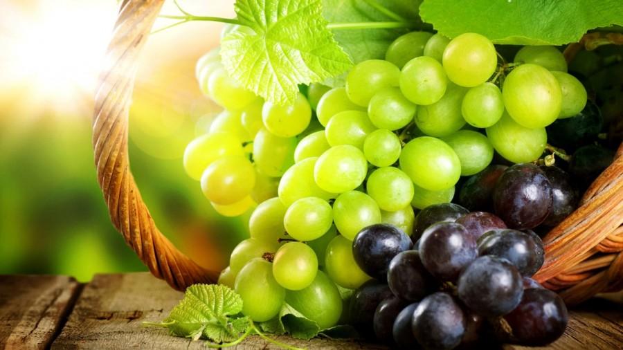 О пользе виноградных косточек при лечении рака