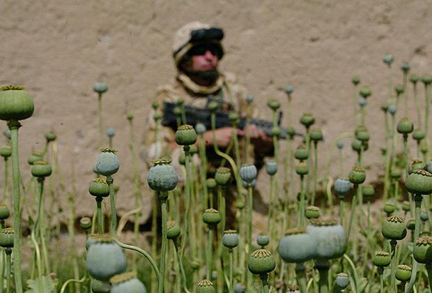 Британский солдат патрулирует маковое поле в Сангине, 2007 год