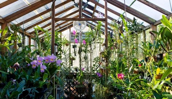 Лучшие тепличные растения для зимы