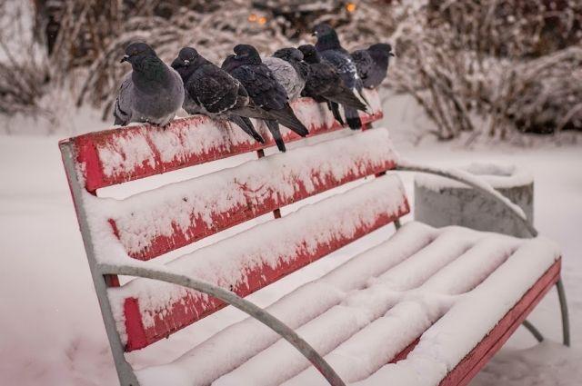 Гидрометцентр предупредил о резком похолодании в Москве