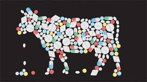 Бифштекс с сюрпризом. Как антибиотики попадают к нам в еду