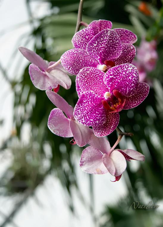 Цветы в фотографиях Натальи Кузнецовой