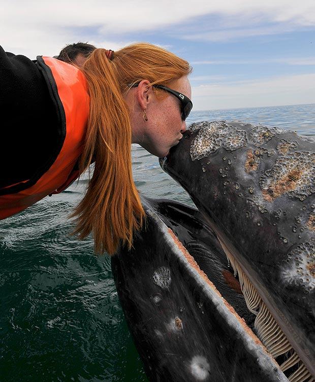 Любвеобильный серый кит (19 фото)