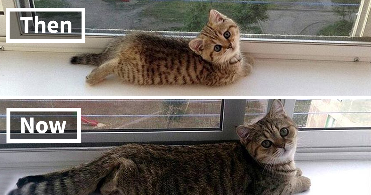 10+ Before-And-After Photos Of Cats Growing Up