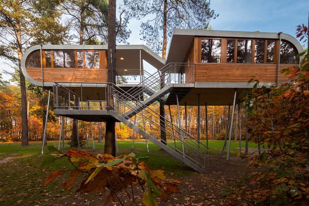 Дом-дерево в Бельгии