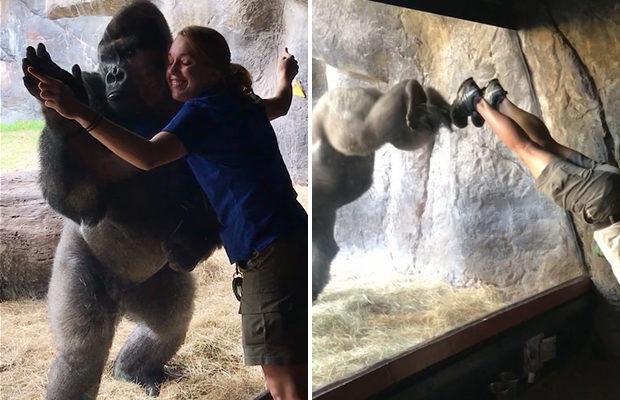 Невероятно, но горилла повторяет движения своего кипера