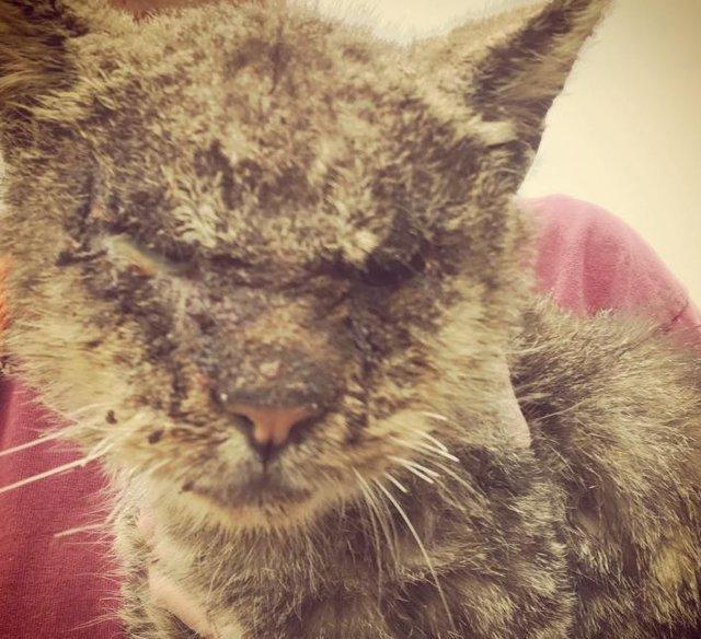 Она могла заразиться, но всё равно обняла страдающего мальчика… И тогда кот осторожно погладил её своей лапой