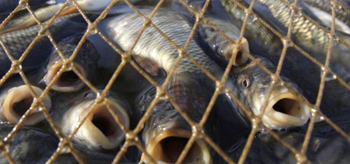В Астраханской области уничтожат около 80 тонн рыбы