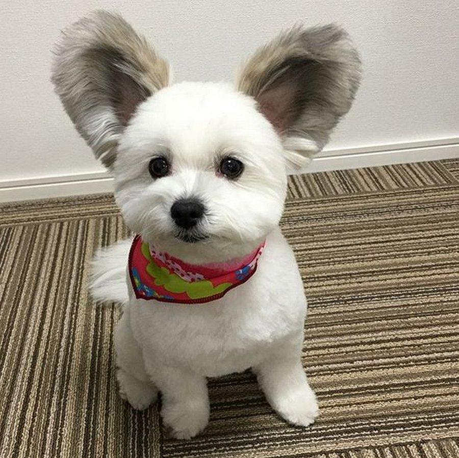 Уши принесли собаке славу в сети