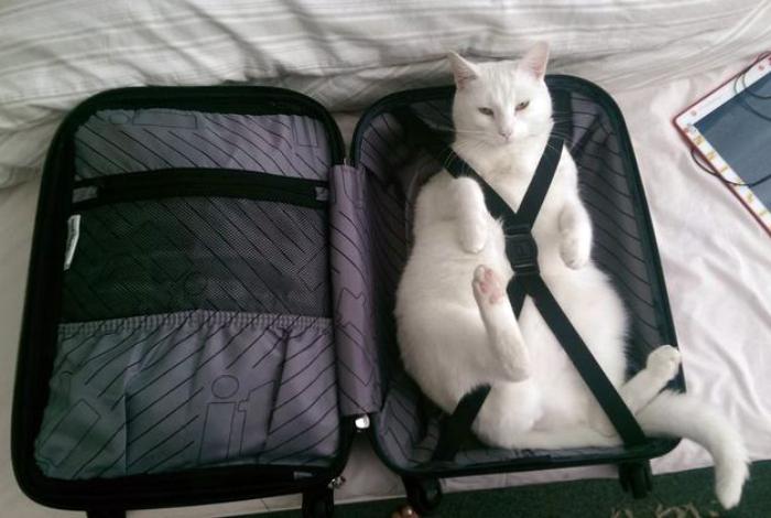 К полету готов.