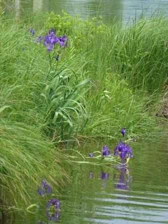 Зеленый пруд...