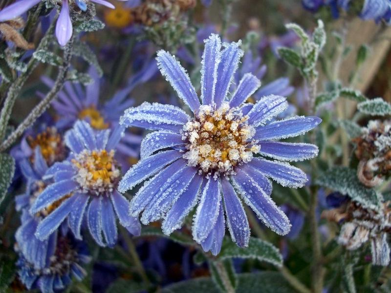 Цветы для Снегурочки.