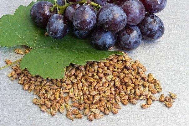 Вы будете удивлены: плодовые косточки иногда полезнее, чем сами фрукты …