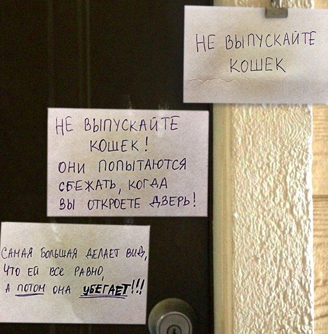 Когда сосед с чувством юмора