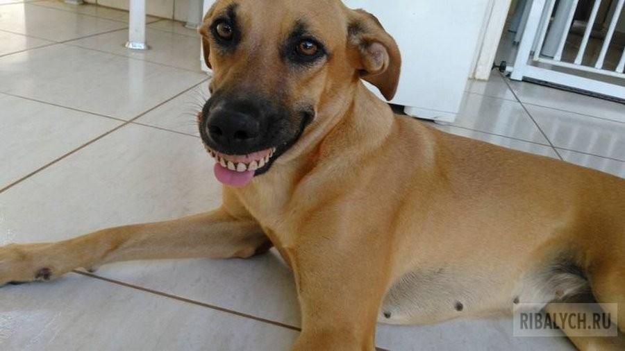 Собака достала себе новую челюсть