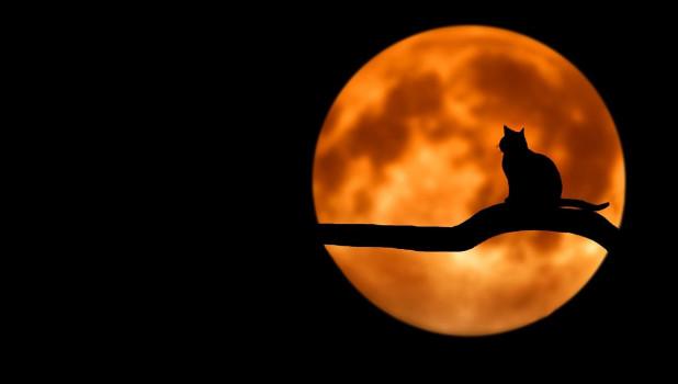 Ночь. Луна. Кошка