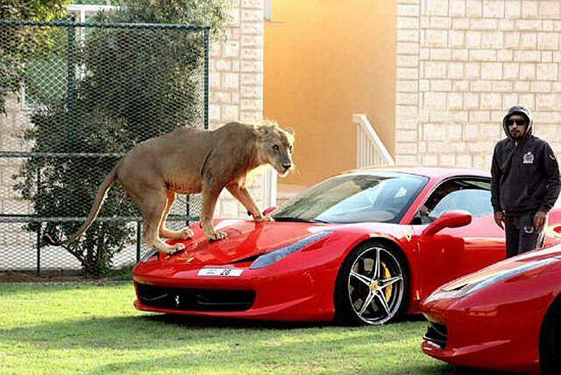 catsncars26 Хищные кошечки и дорогие машины: досуг арабского миллионера